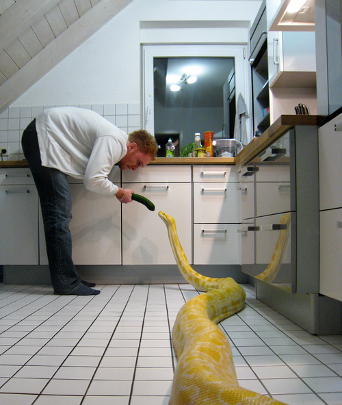 Snake cucumber