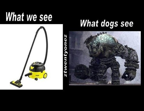 What dogs see