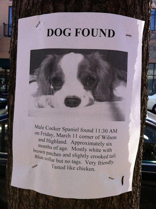 Dog-found