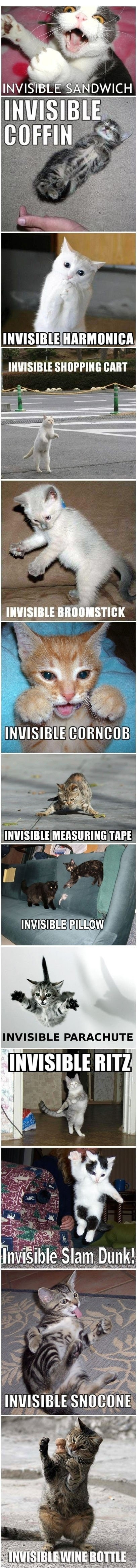 Cats doing invisible things