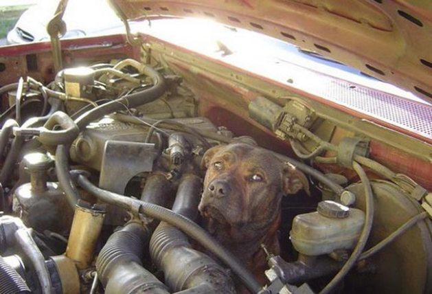 Dog engine