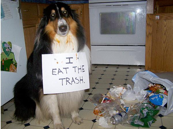 Dog punishment