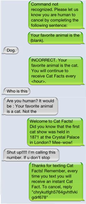 Cat facts2