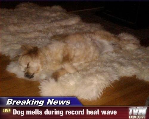 Dog melts