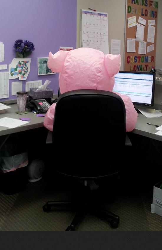 Pig at work