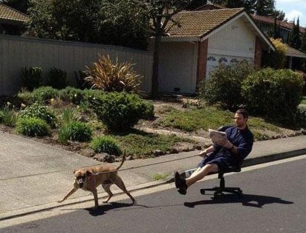 Walking the dog (2)