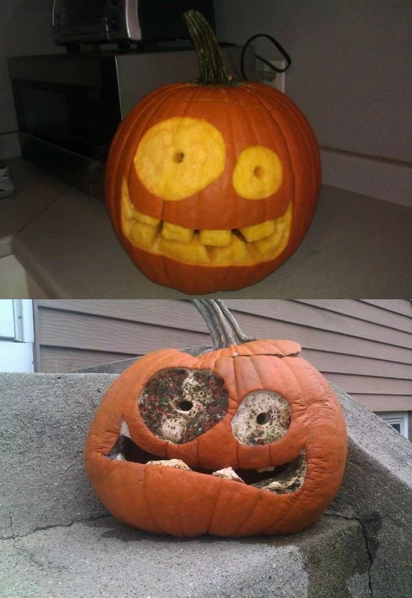Pumpkin on meth