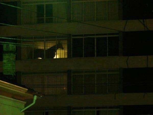 Horse in apartment