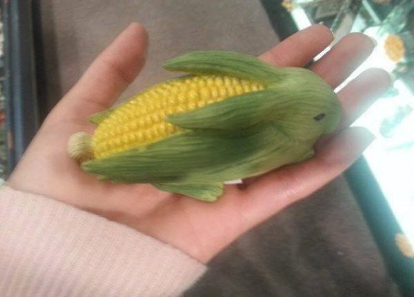 corn bunny