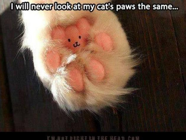 Paw bear