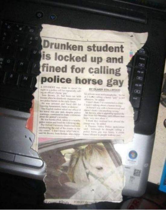Gay police horse