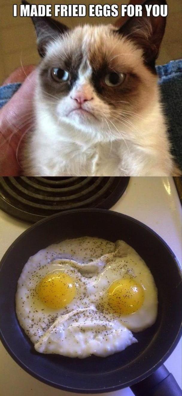 Grmpy cat breakfast