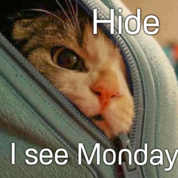 I see monday