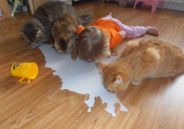 Milk spill