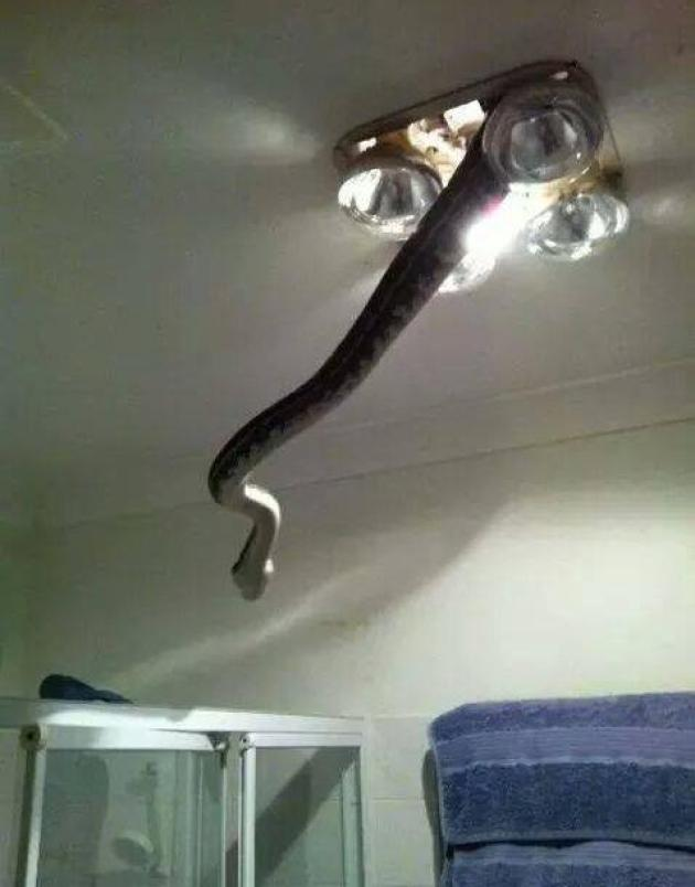 Snake from light