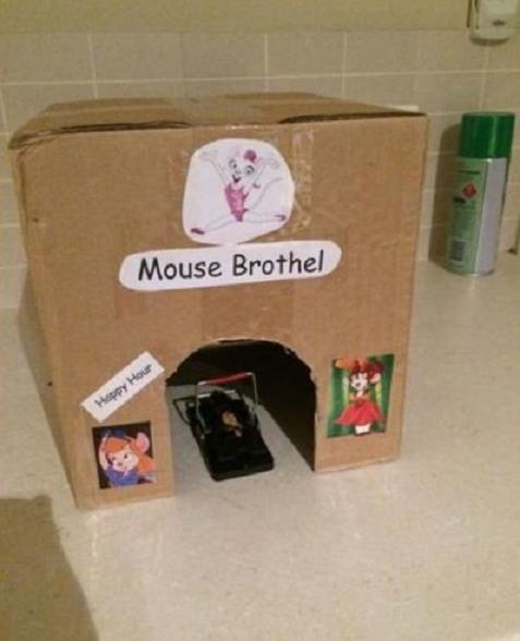Mouse Brothel