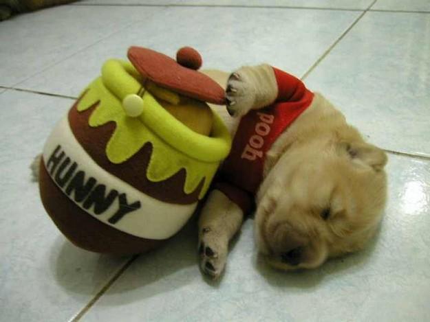 Winnie the Pooped