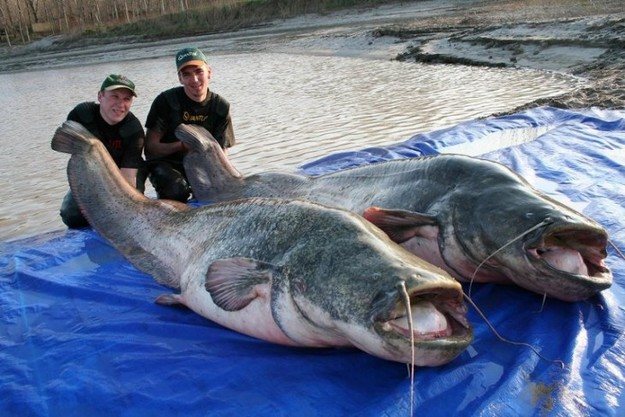 Big ass fish