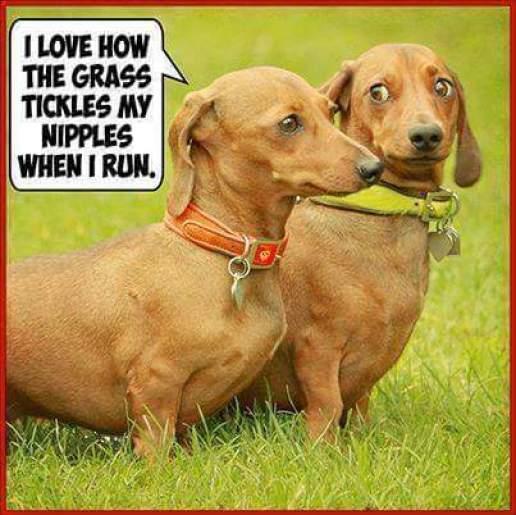 Weiner dog thoughts
