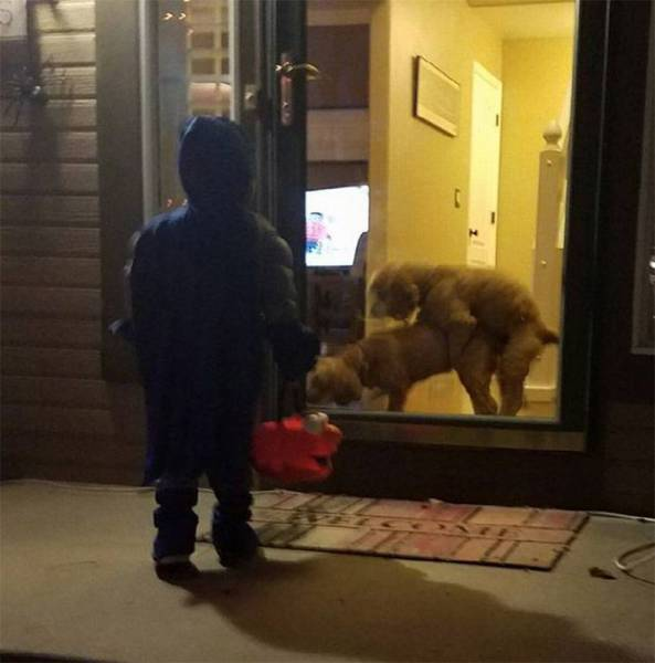 trick-or-treat-dogs