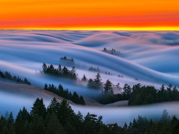 fog-waves