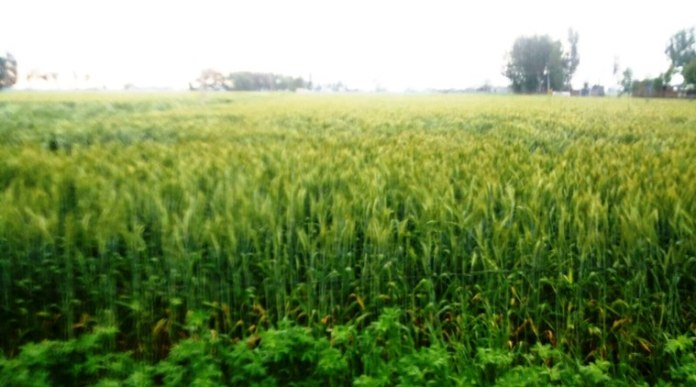 Farmers take, crop management, managements app,failure of crops, drought