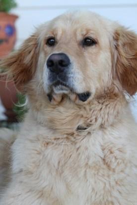 Barney the poser