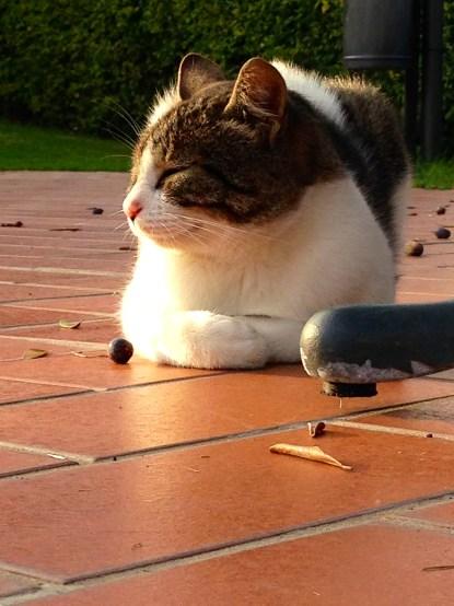 Cute little cat enjoying the sun