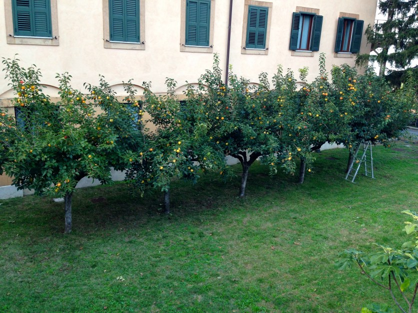 The fruit trees outside our hotel window