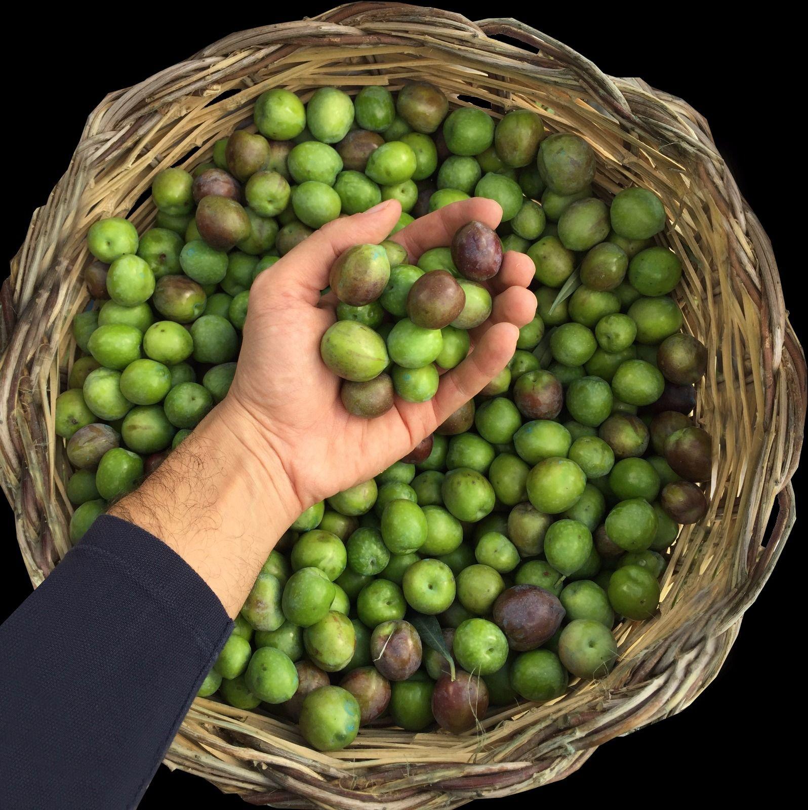 Ogglio Olive Oil   Bitten Oxford