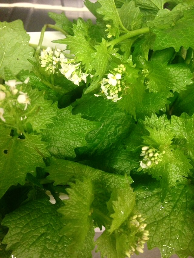 Foraging Tips for Beginners