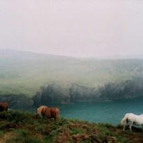 Wild ponies on St David's Head, Wales