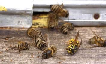 Pe terenul cui sunt amplasați stupii cu albine ucigașe din Movileni?
