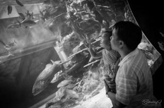 J'aime Moriyah enjoys the giant fishes at Ocean Park