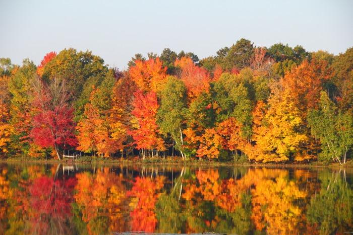 Fall colors at cabin