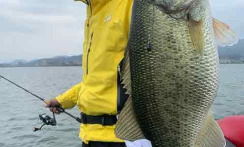 3月22日琵琶湖ガイドは7年ぶりにバス釣りのゲスト様に釣らせてという常連様からの御依頼で頑張って頂きましたが?
