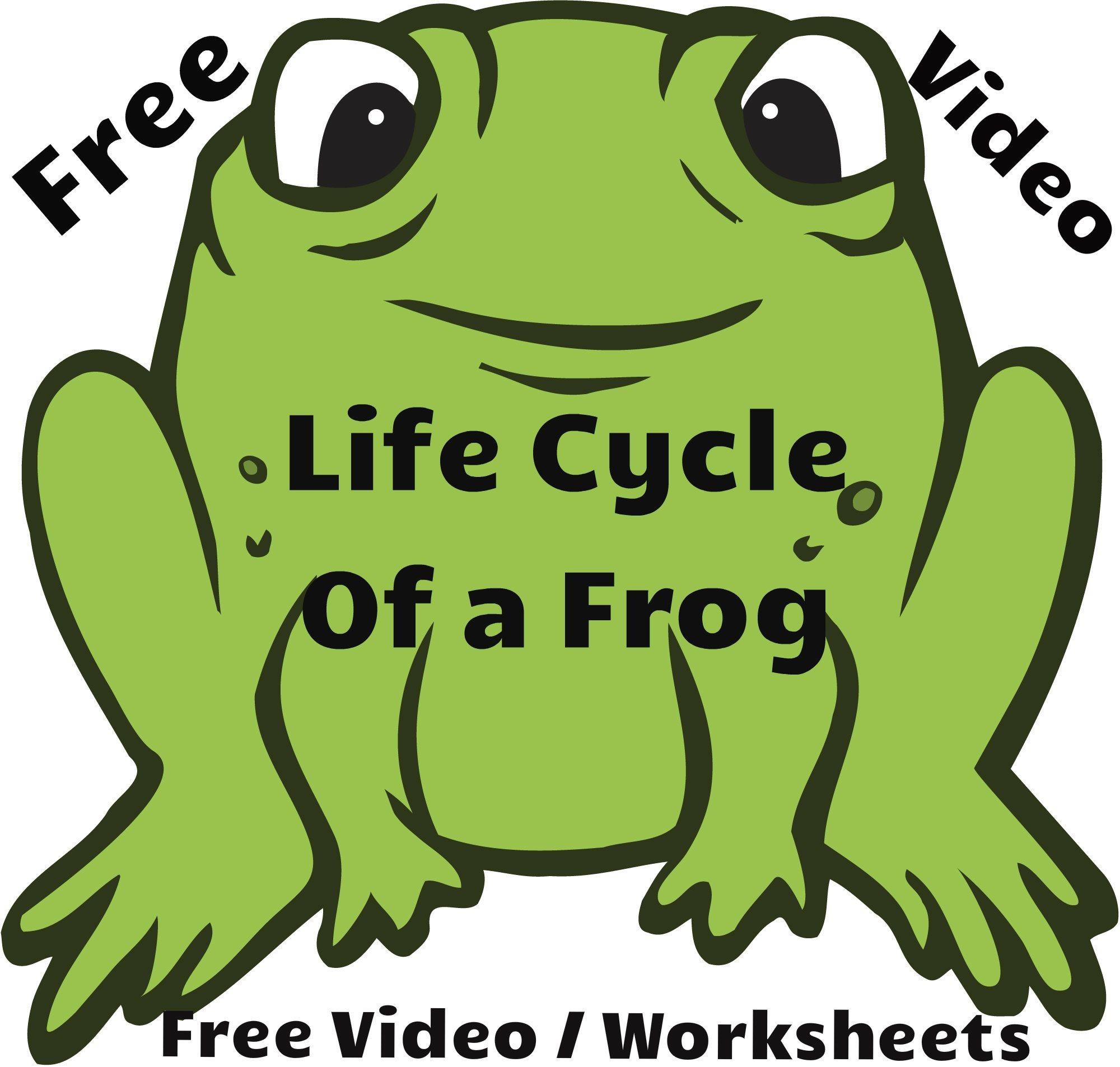 Papercraft Papercraft Frog