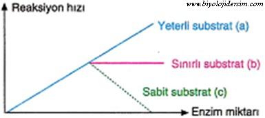 enzim miktarı substrat ilişkisi