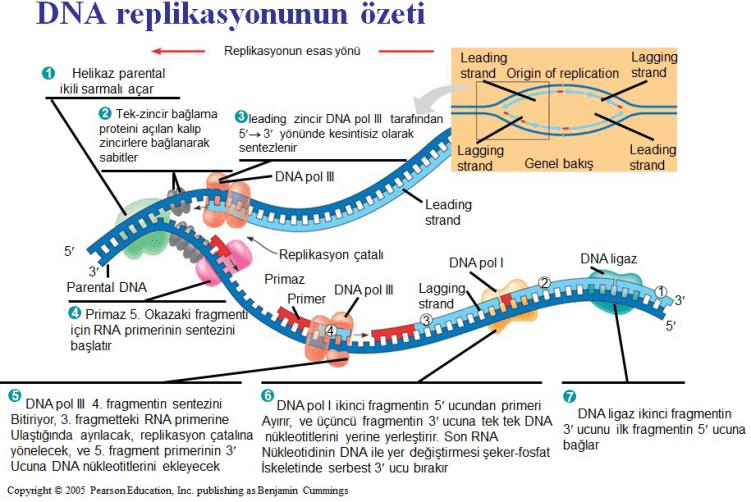 replikasyon özet şema