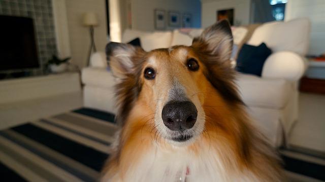 dog-705820_640