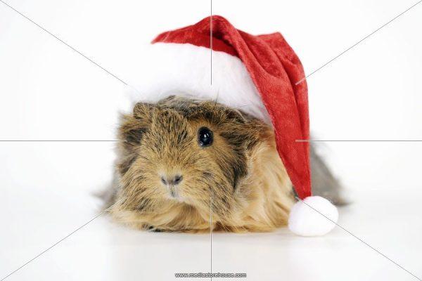 hamster santa cap