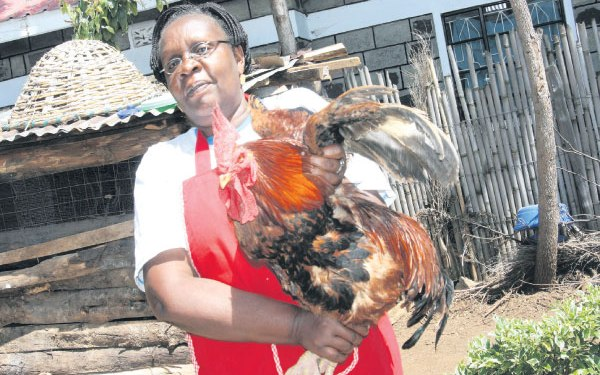 Broilers farming in Kenya