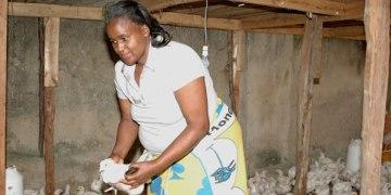Poultry Farming in Kisumu