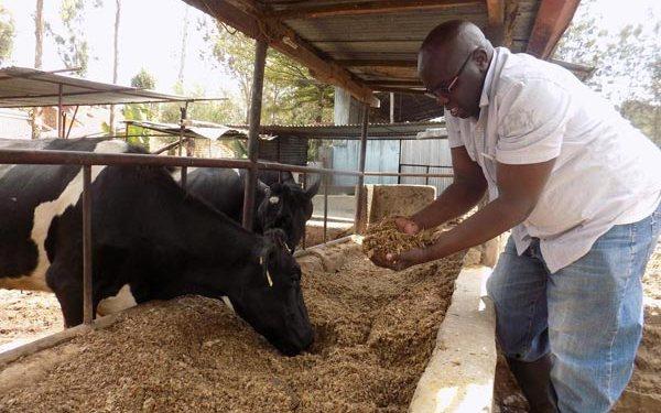 Dairy Farming Value Addition