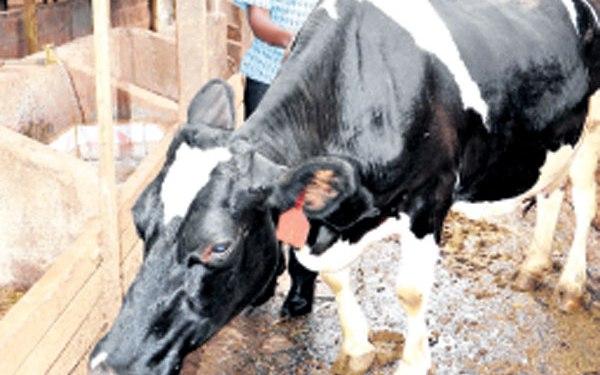 Dairy Business Kenya