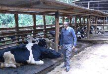 Best dairy cows in Kenya