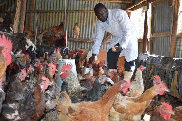 Most Profitable Chicken Breeds