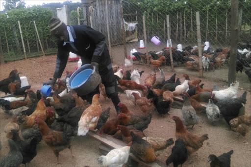 Poultry Kienyeji Farming