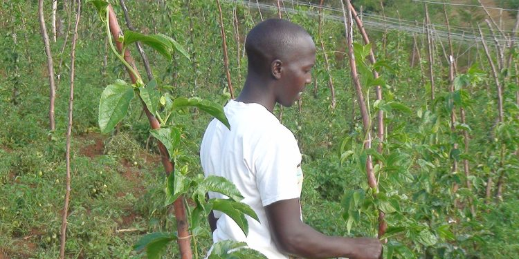 Farming millions in Kenya