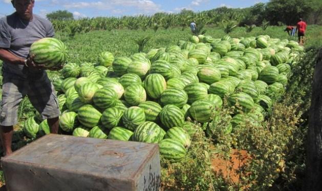 Watermelon Farming Techniques